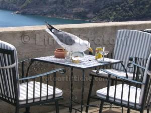 linda-fratoni-ischia-campania-italia-gabbiano-aperitivo-fotoartistiche-foto-artistiche