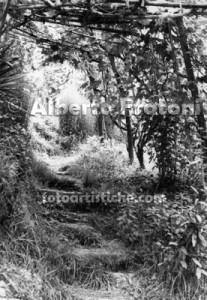 olevano_romano_vigna_alberto_fratoni_fotoartistiche_foto_artistiche
